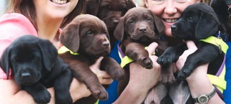 pup-litter-holding