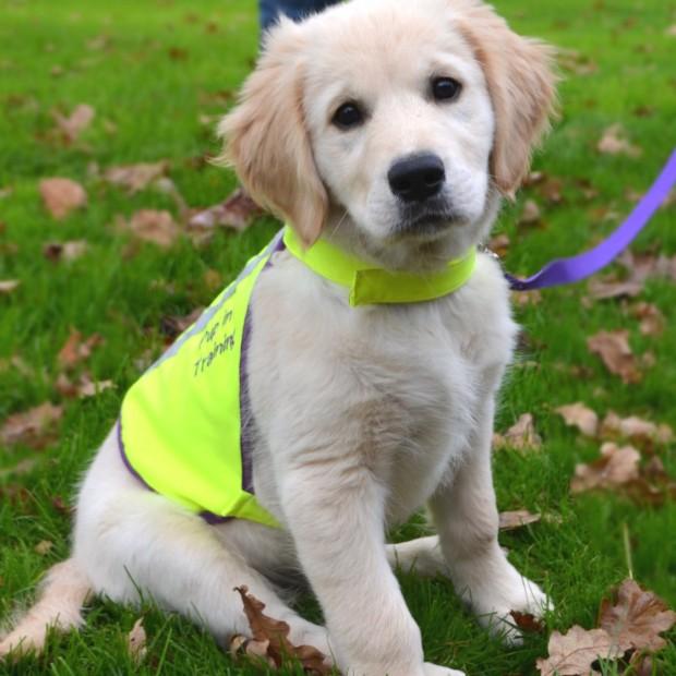 Lead a DfD Puppy