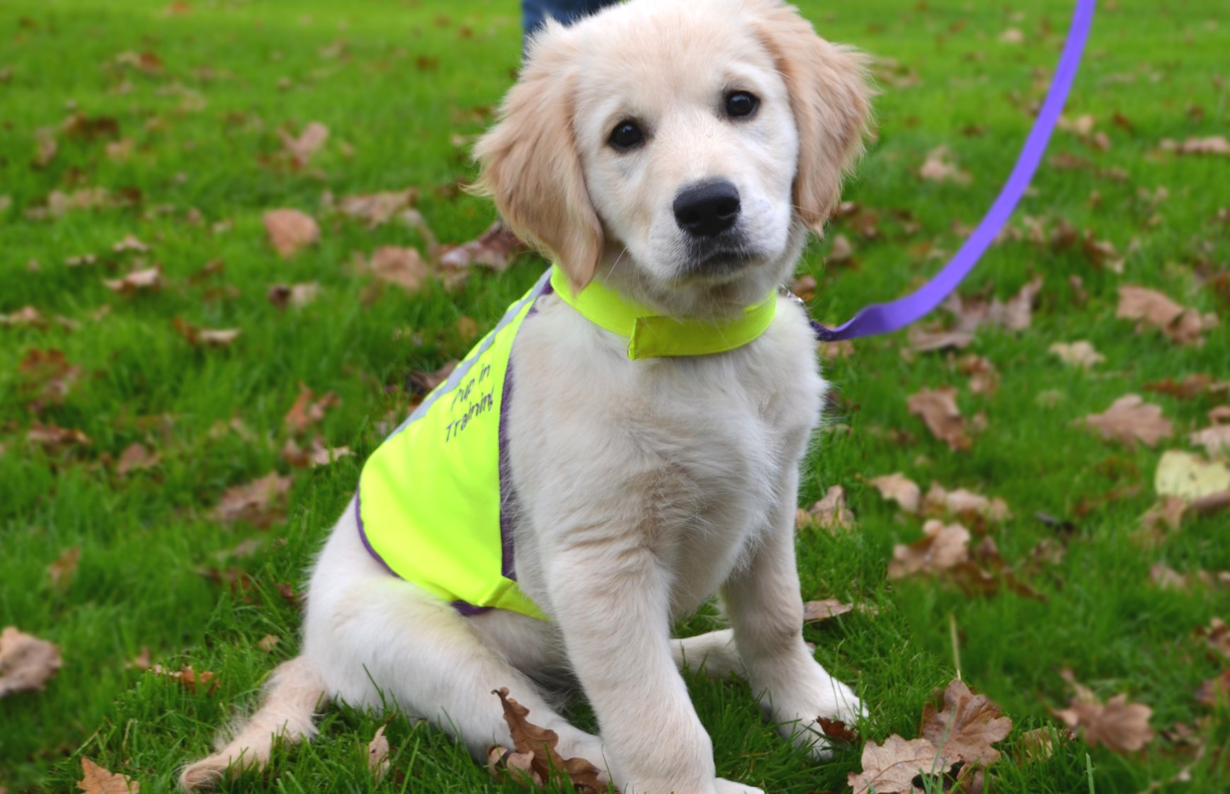 Lead a Puppy - Dogs for the Disabled