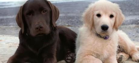sponsor-pups3