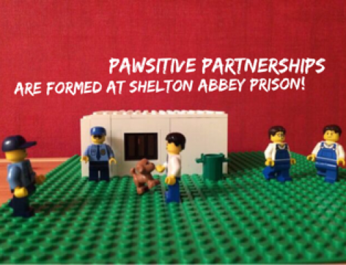 Lego Stage 3 – Prison Programme
