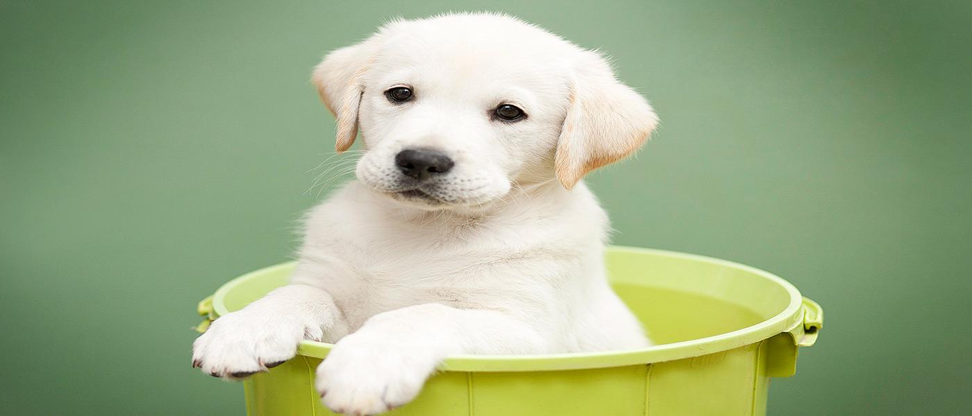 sponsor-a-puppy-slide